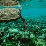 Save Our Ocean | Sea Plan Organization | Protect | Ocean | Earth.